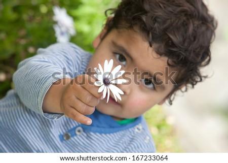 little boy holding a flower - stock photo