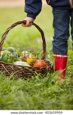 Little boy holding basket with organic vegetables on the green grass. Outdoors. freshly harvested vegetables. raw vegetables in wicker basket in child's hands. summer garden background. - stock photo