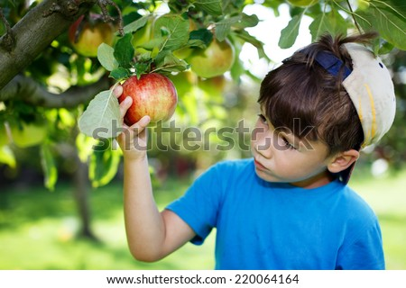Little boy in cap picking apples, outdoor portrait - stock photo