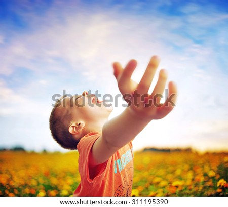 Little boy in flowers field - stock photo
