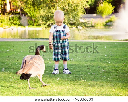 Little boy in park feeding a goose. Hair loss due to chemo therapy against cancer.