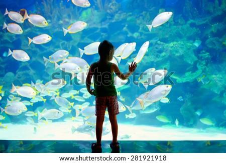 little boy, kid watching the shoal of fish swimming in oceanarium - stock photo