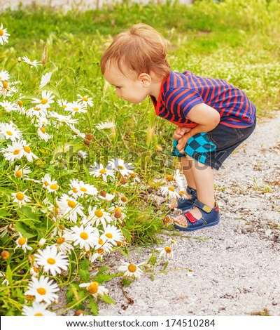 Little boy looking at daisies - stock photo
