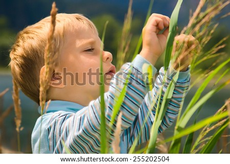 Little boy playing in tall grass - stock photo