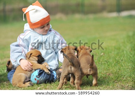 little boy playing with  puppies belgian shepherd malinois