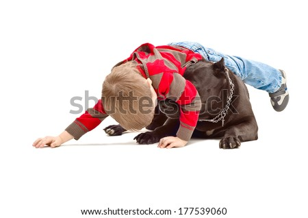 Little boy playing with the dog breed Staffordshire Terrier - stock photo