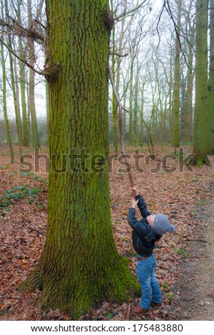 Little boy reaching for heights with a branch on a winter day - stock photo