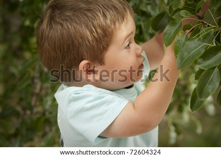 little boy reaching in to pick fruit from tree - stock photo