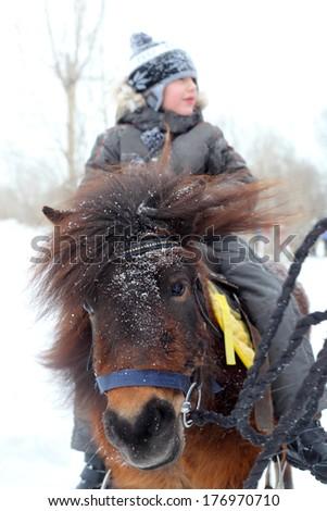 little boy riding horse closeup - stock photo