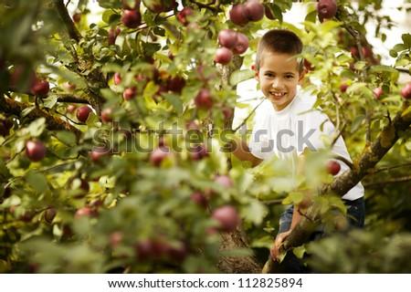 little boy sitting on the apple tree - stock photo