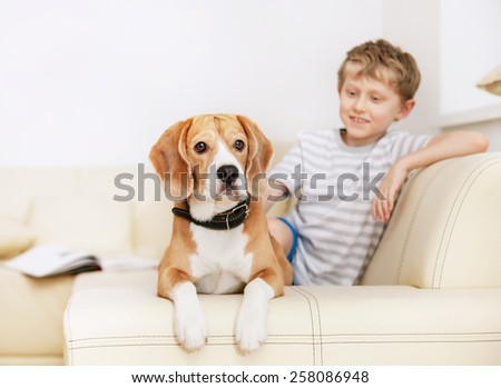 Little boy with beagle on the white sofa - stock photo