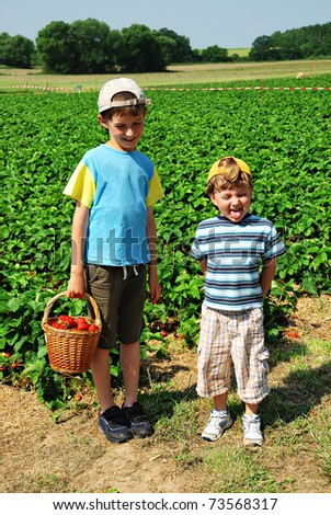 Little boys at the strawberry plantation picking berries