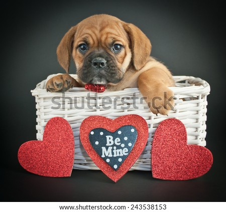 Little Bulldog puppy in a basket with hearts around her on a black background.