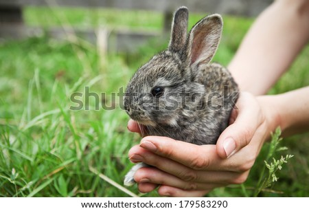 Little bunny in cupped hands. Focus on bunny's head. - stock photo