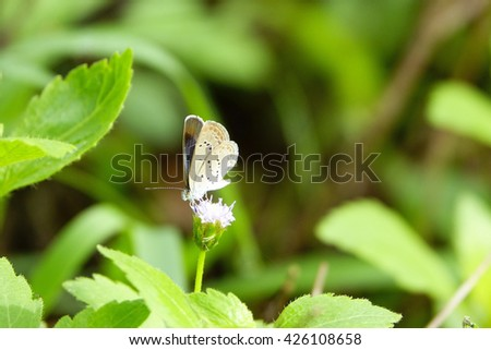 Little Butterfly and flower on blurry green leaf background:Close up,select focus with shallow depth of field:ideal use for background. - stock photo