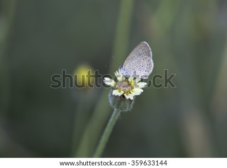 Little Butterfly sucking nectar from purple flowers - stock photo