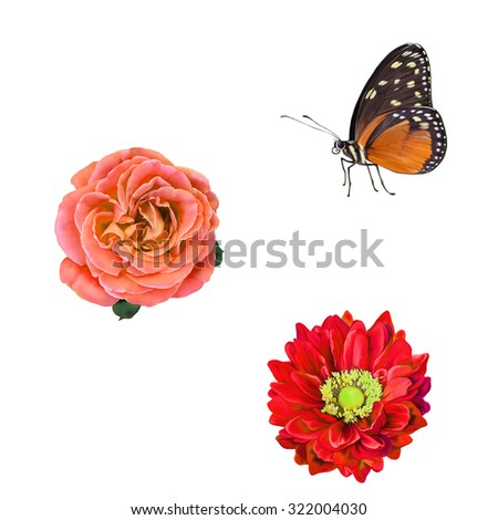 Little butterfly with orange and black wings, Bright red Dahlia flower, Rose and Mona Lisa flower, Spring flower.Isolated on white background - stock photo
