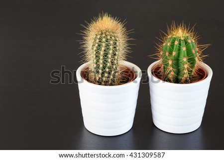 little cactus plants on dark background