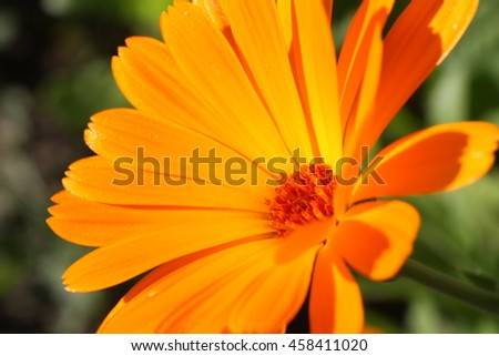 Little calendula flower on the field