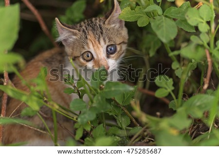 little cat hide in the grass in the outdoor