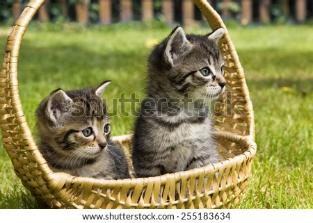 little cat in wicker basket on green grass outdoors - stock photo
