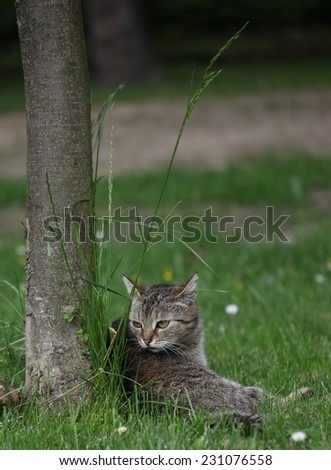 Little cat on the grass and tree - stock photo