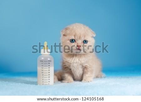 Little cat sitting near the nipple with milk - stock photo