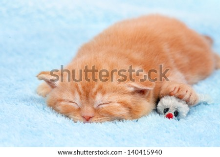 Little cat sleeping on blue blanket with toy mouse - stock photo