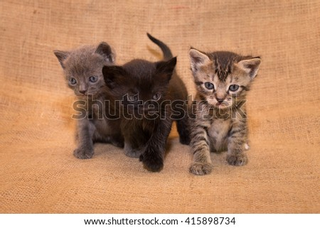 Little cats on sacking background - stock photo