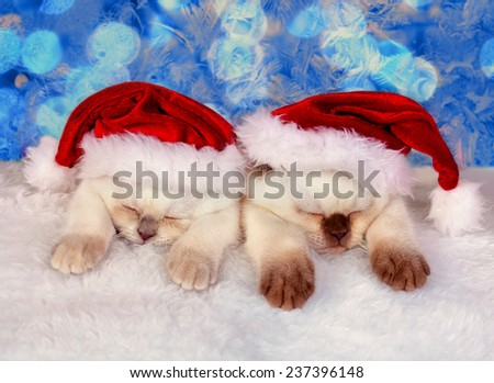 Little cats wearing Santa's hat sleeping against Christmas background - stock photo