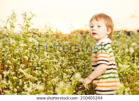 little caucasian boy in striped dress at summer sunset buckwheat field - stock photo
