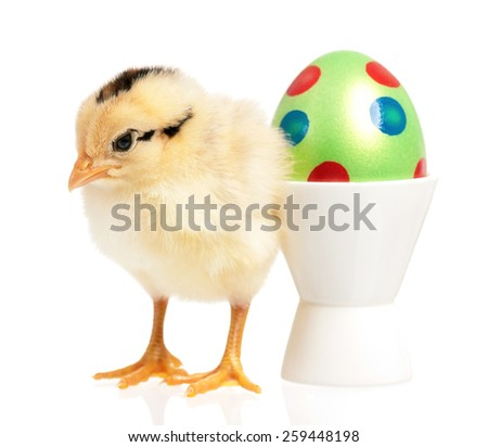 Little chick with Easter egg, isolated on a white background - stock photo