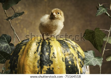 Little chicken and a pumpkin and easter