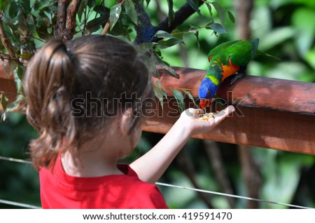 Little child (girl age 5-6) feed a Rainbow Lorikeet (Trichoglossus moluccanus) native bird to Australia sit on a tree branch in rainforest in the tropical north of Queensland, Australia. - stock photo