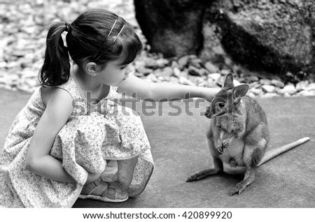 Little child (girl age 5-6) petting a Yellow-footed rock-wallaby in  Queensland, Australia. It appears on the IUCN Red List of Threatened Species . - stock photo