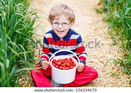 Little child in glasses picking and eating red ripe strawberries on organic pick a berry farm in summer, on warm day. - stock photo