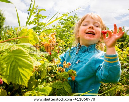 Little child picking up and eating raspberries with delicious gesture - stock photo