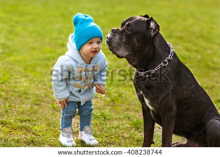 little child plays with a dog on the grass, Cane Corso - stock photo