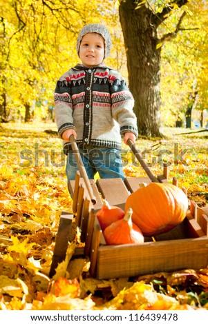 little child with a wheelbarrow full of pumpkin - stock photo