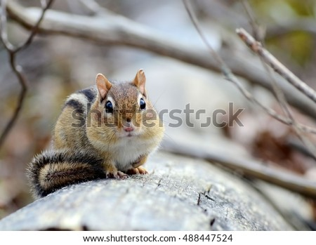 Little chipmunk resting on a fallen tree