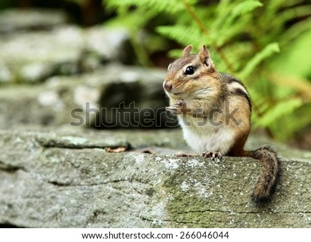 Little chipmunk with a mischievous expression  - stock photo