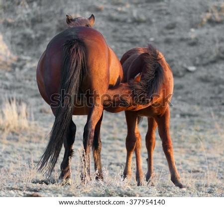 Little colt was in the middle of pastures - stock photo