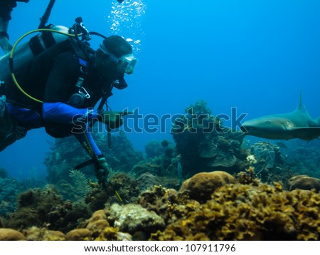 LITTLE CORN ISLAND, NICARAGUA - APRIL 5: Scuba diver approaches nurse shark on coral reef on April 5, 2012 in Little Corn Island, Nicaragua. Scuba divers make important contributions to economy.