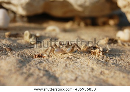 Little crab on sand close up