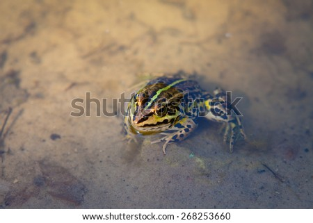 Little curious frog - stock photo