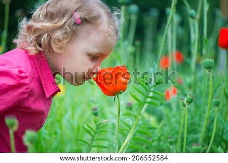 Little curly hair girl sniffing red poppies;  - stock photo