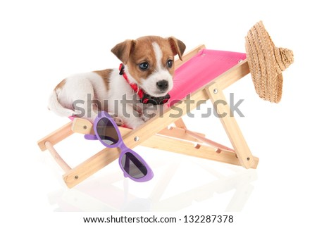 Little cute beach puppy resting in chair - stock photo
