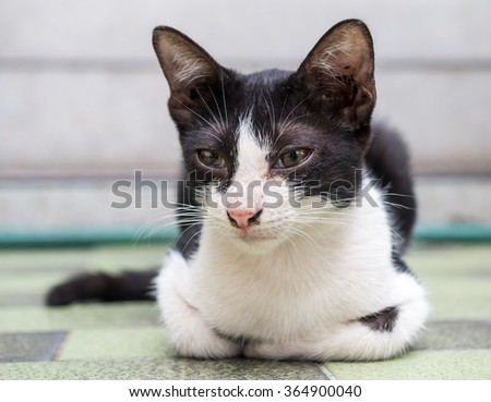 Little cute black and white kitten lay on floor in outdoor park with natural light, selective focus on its eye