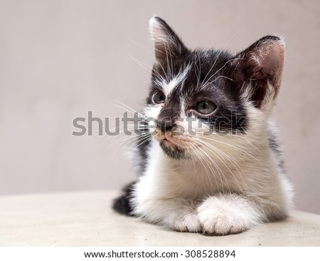 Little cute black and white kitten lay on white floor look to right side, selective focus on its eye - stock photo