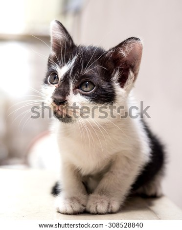 Little cute black and white kitten lay on white floor look to sky, selective focus on its eye - stock photo